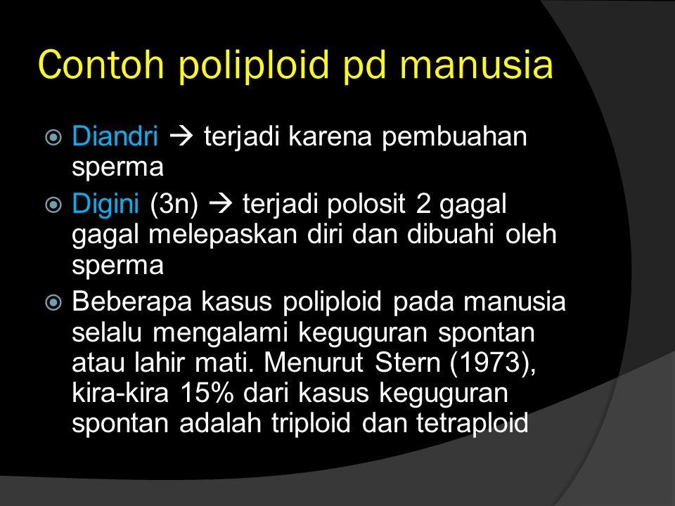 Contoh poliploid pd manusia