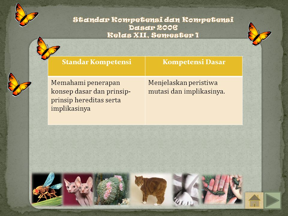 Standar Kompetensi dan Kompetensi Dasar 2006