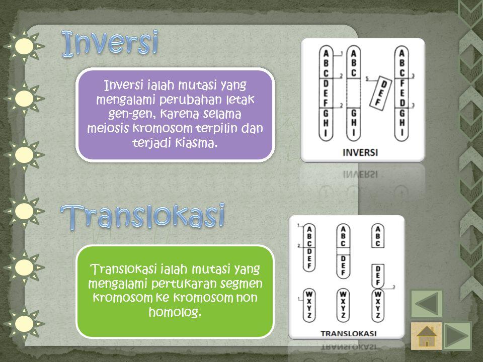 Inversi Inversi ialah mutasi yang mengalami perubahan letak gen-gen, karena selama meiosis kromosom terpilin dan terjadi kiasma.