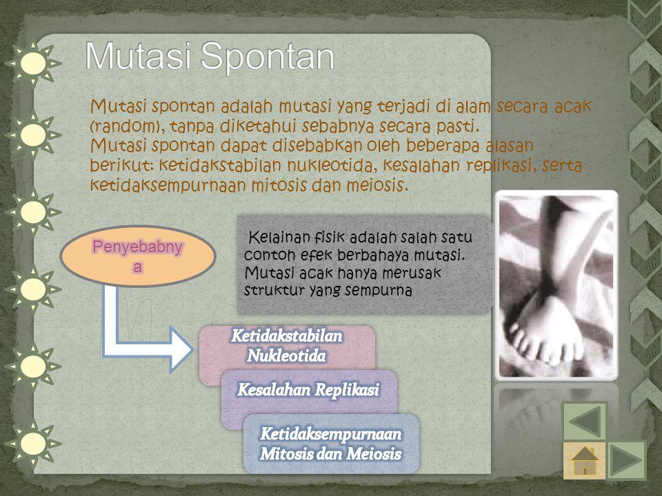 Mutasi Spontan Mutasi spontan adalah mutasi yang terjadi di alam secara acak (random), tanpa diketahui sebabnya secara pasti.