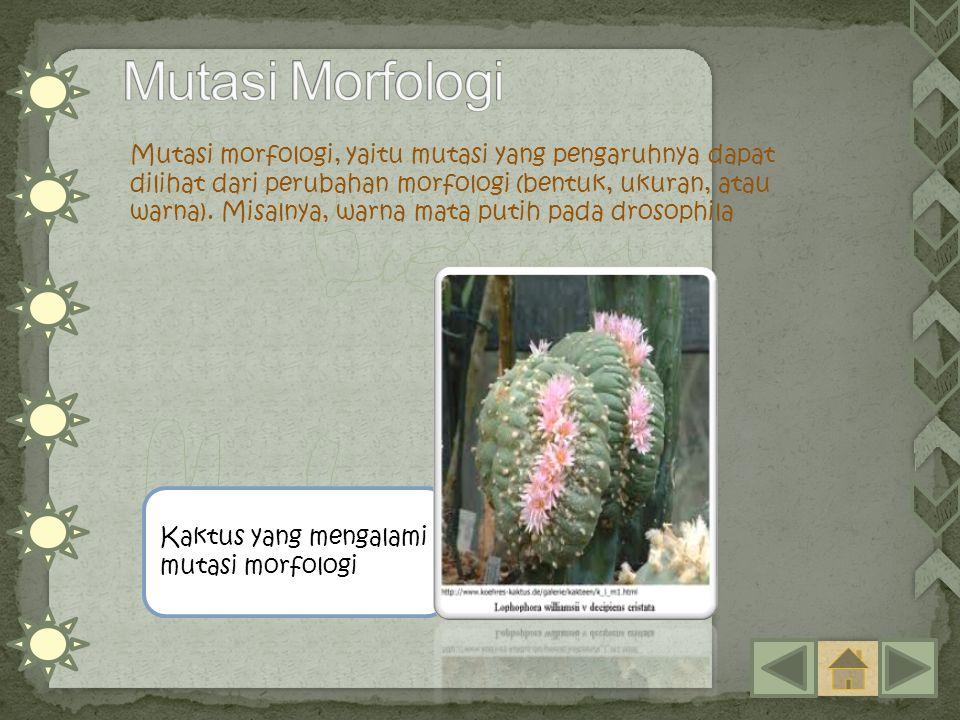 Mutasi Morfologi