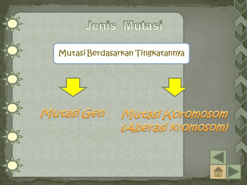 Mutasi Berdasarkan Tingkatannya Mutasi Koromosom (Aberasi kromosom)