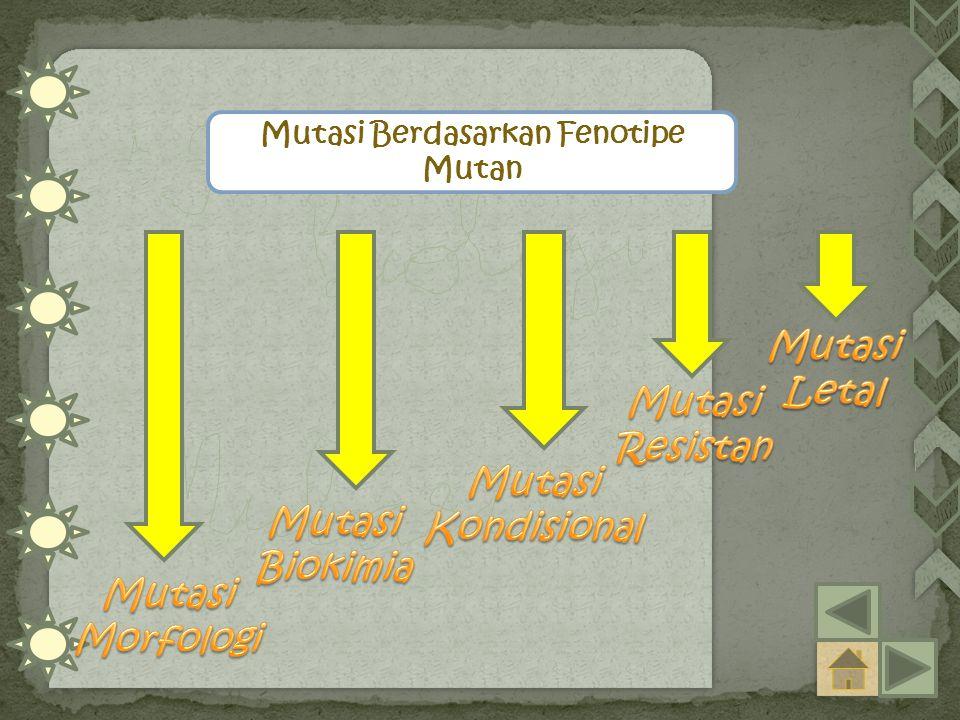 Mutasi Berdasarkan Fenotipe Mutan