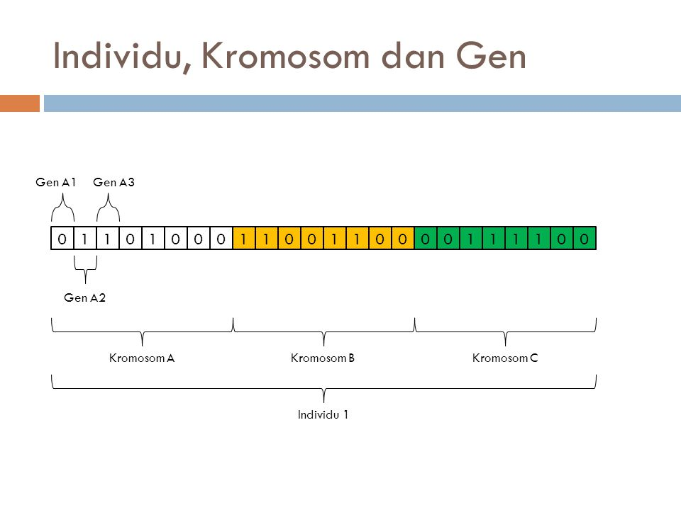 Individu, Kromosom dan Gen