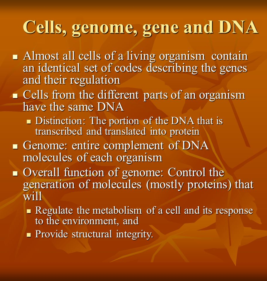 Cells, genome, gene and DNA