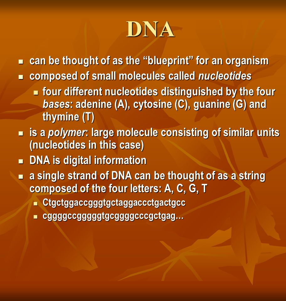 DNA can be thought of as the blueprint for an organism