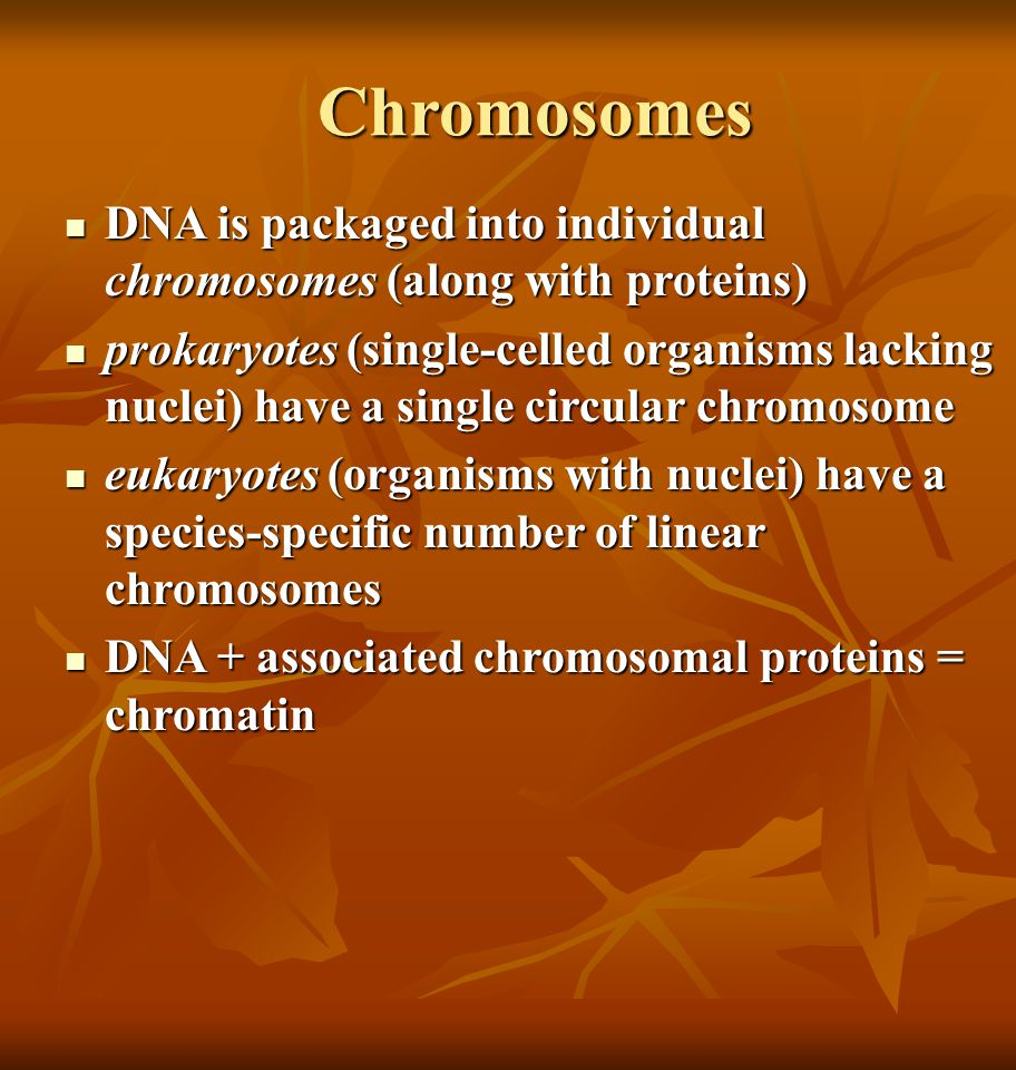 Chromosomes DNA is packaged into individual chromosomes (along with proteins)