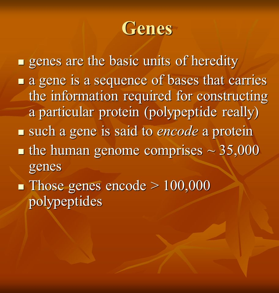 Genes genes are the basic units of heredity