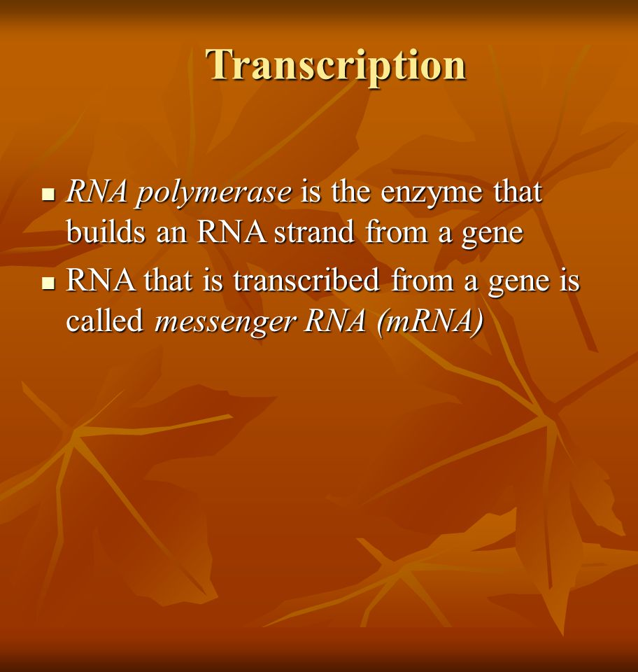 Transcription RNA polymerase is the enzyme that builds an RNA strand from a gene.