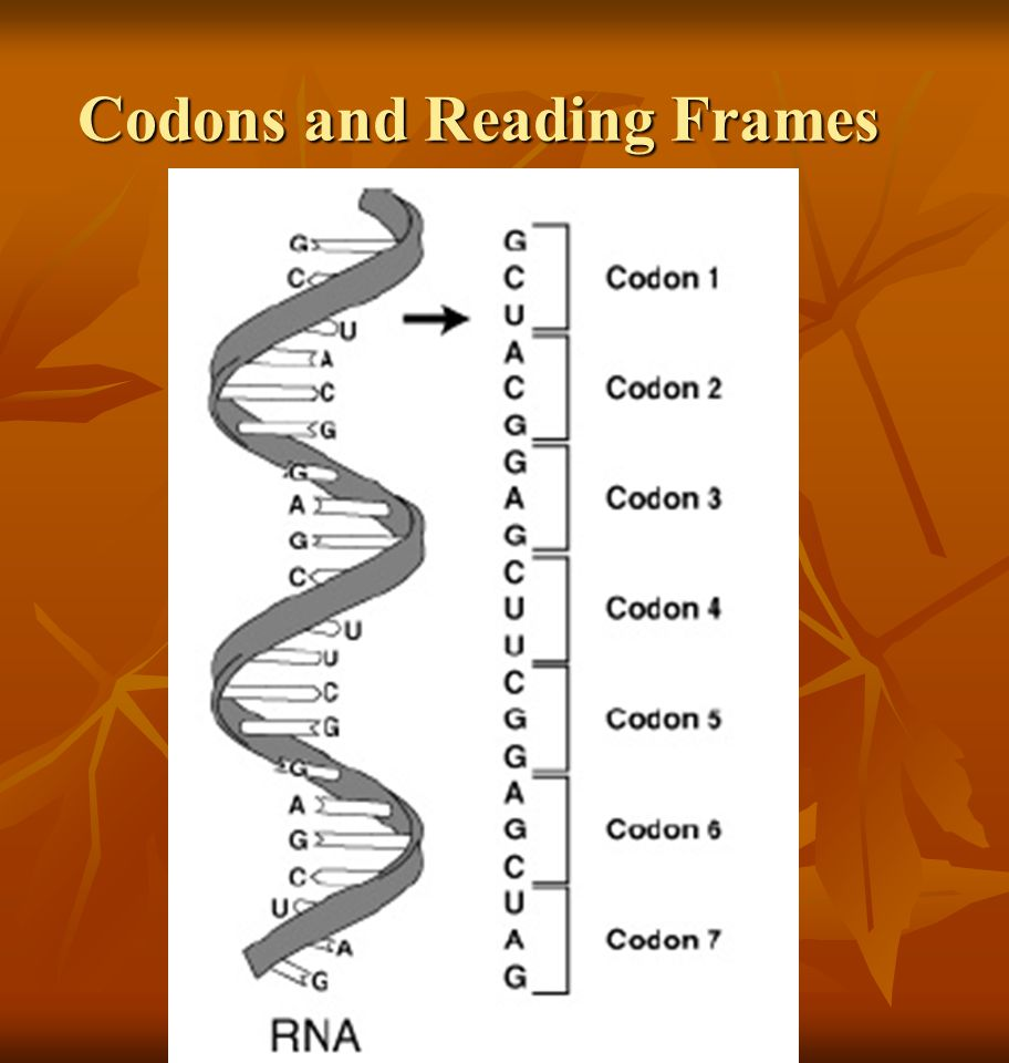 Codons and Reading Frames