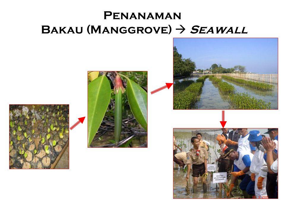 Penanaman Bakau (Manggrove)  Seawall