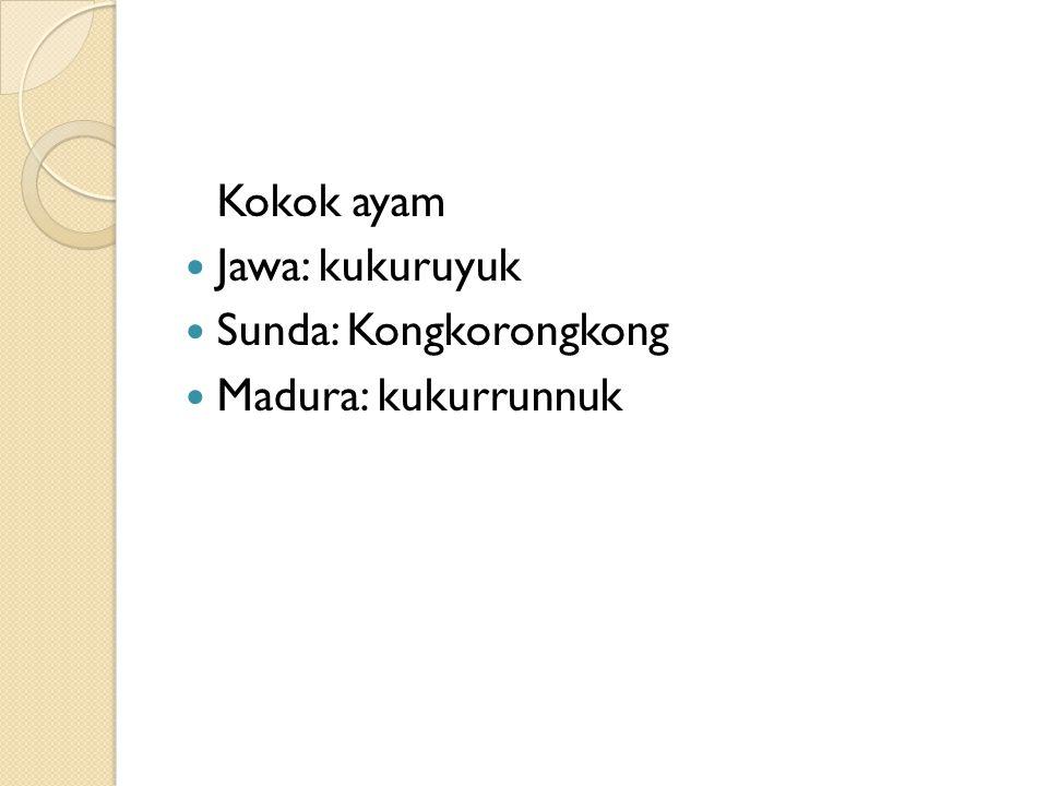 Kokok ayam Jawa: kukuruyuk Sunda: Kongkorongkong Madura: kukurrunnuk
