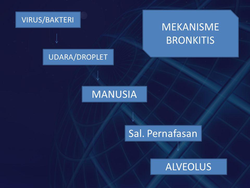 MEKANISME BRONKITIS MANUSIA Sal. Pernafasan ALVEOLUS VIRUS/BAKTERI