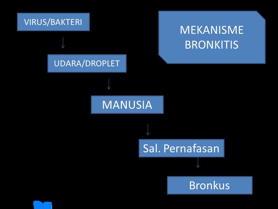 MEKANISME BRONKITIS MANUSIA Sal. Pernafasan Bronkus VIRUS/BAKTERI