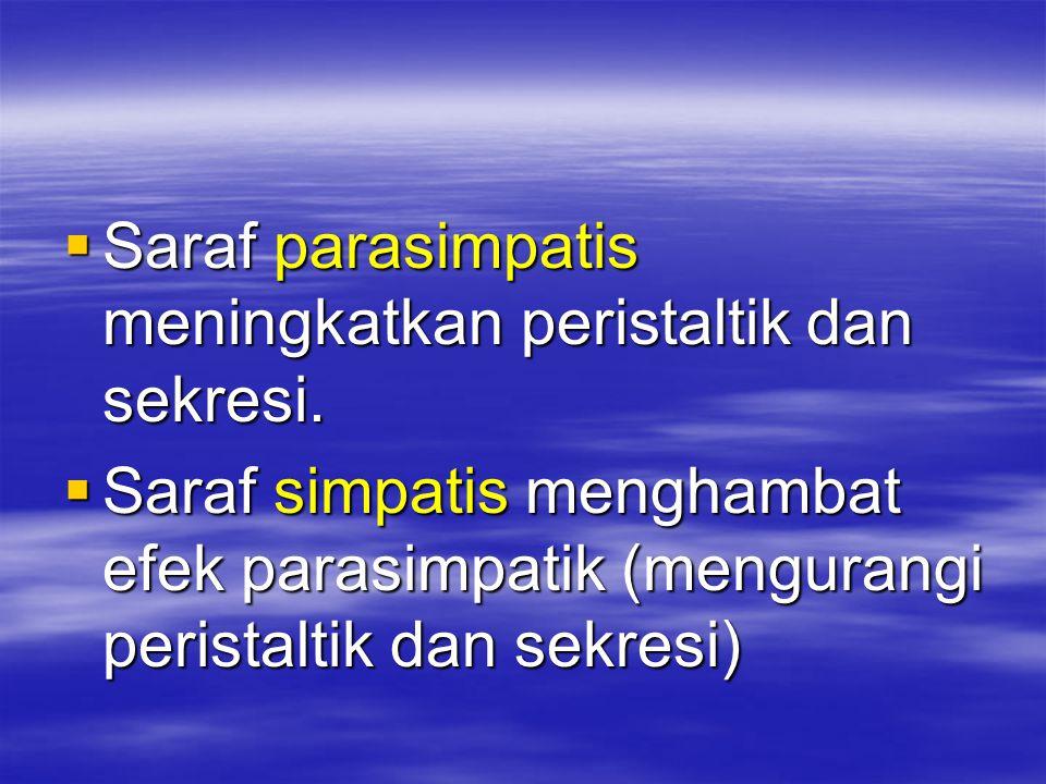 Saraf parasimpatis meningkatkan peristaltik dan sekresi.