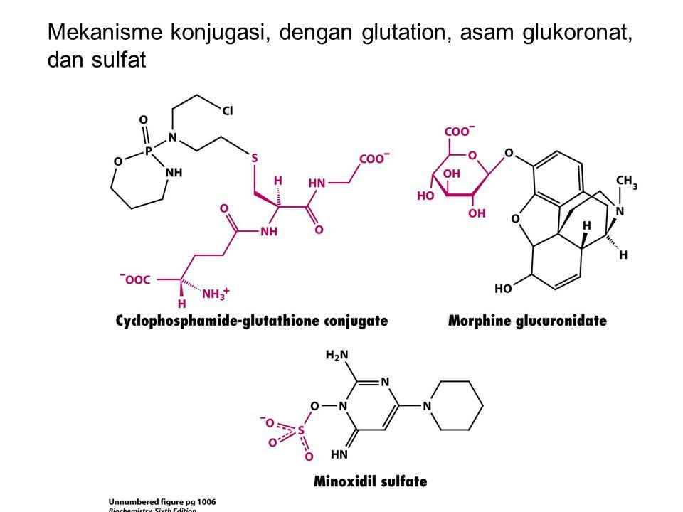 Mekanisme konjugasi, dengan glutation, asam glukoronat, dan sulfat