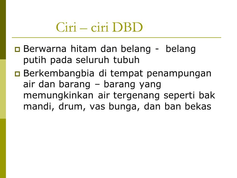 Ciri – ciri DBD Berwarna hitam dan belang - belang putih pada seluruh tubuh.