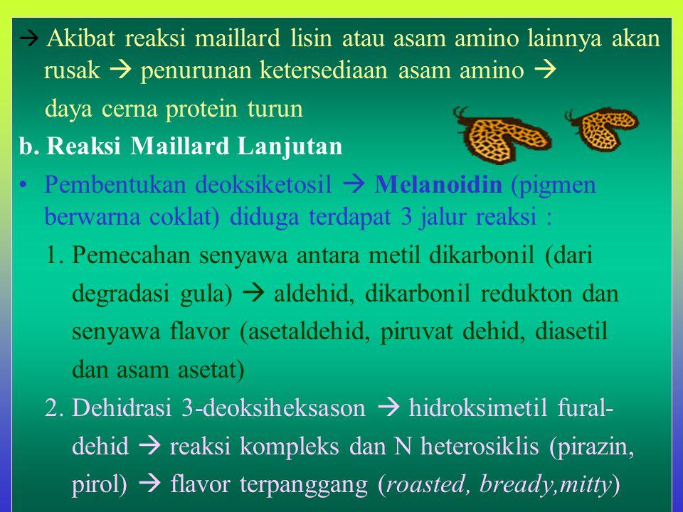 daya cerna protein turun b. Reaksi Maillard Lanjutan