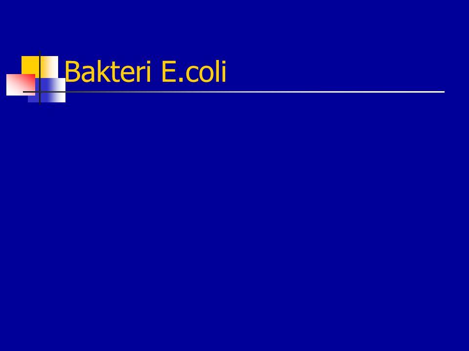 Bakteri E.coli