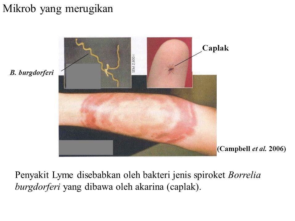 Mikrob yang merugikan Caplak. B. burgdorferi. (Campbell et al. 2006) Penyakit Lyme disebabkan oleh bakteri jenis spiroket Borrelia.