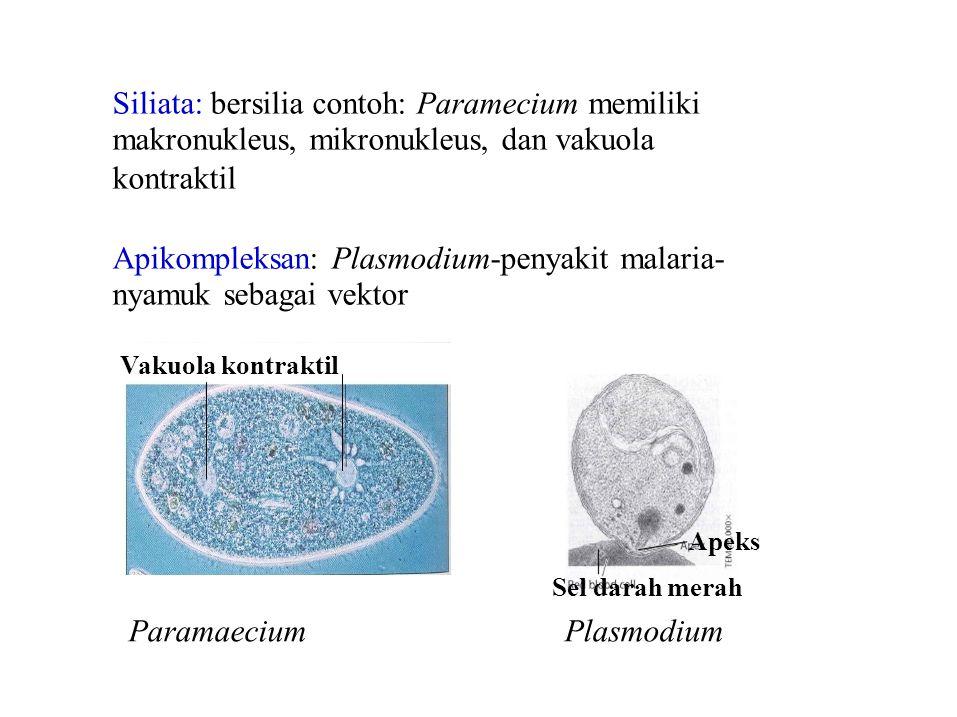 Siliata: bersilia contoh: Paramecium memiliki