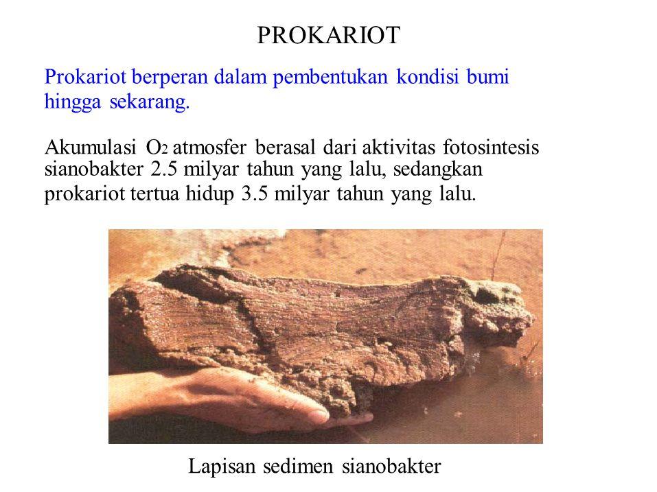 PROKARIOT Prokariot berperan dalam pembentukan kondisi bumi