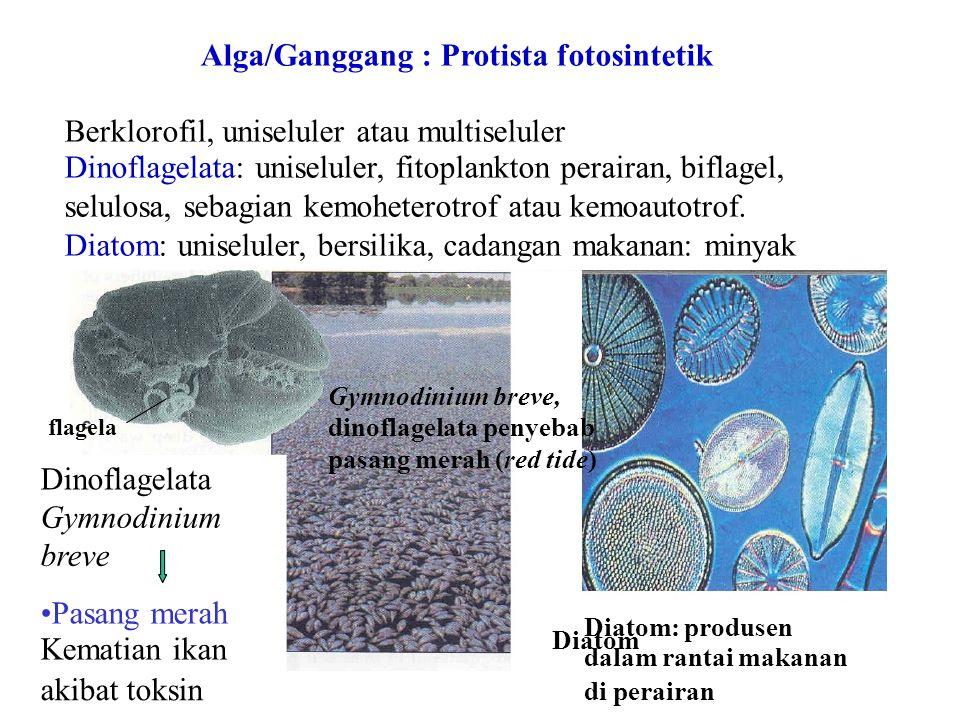 Berklorofil, uniseluler atau multiseluler