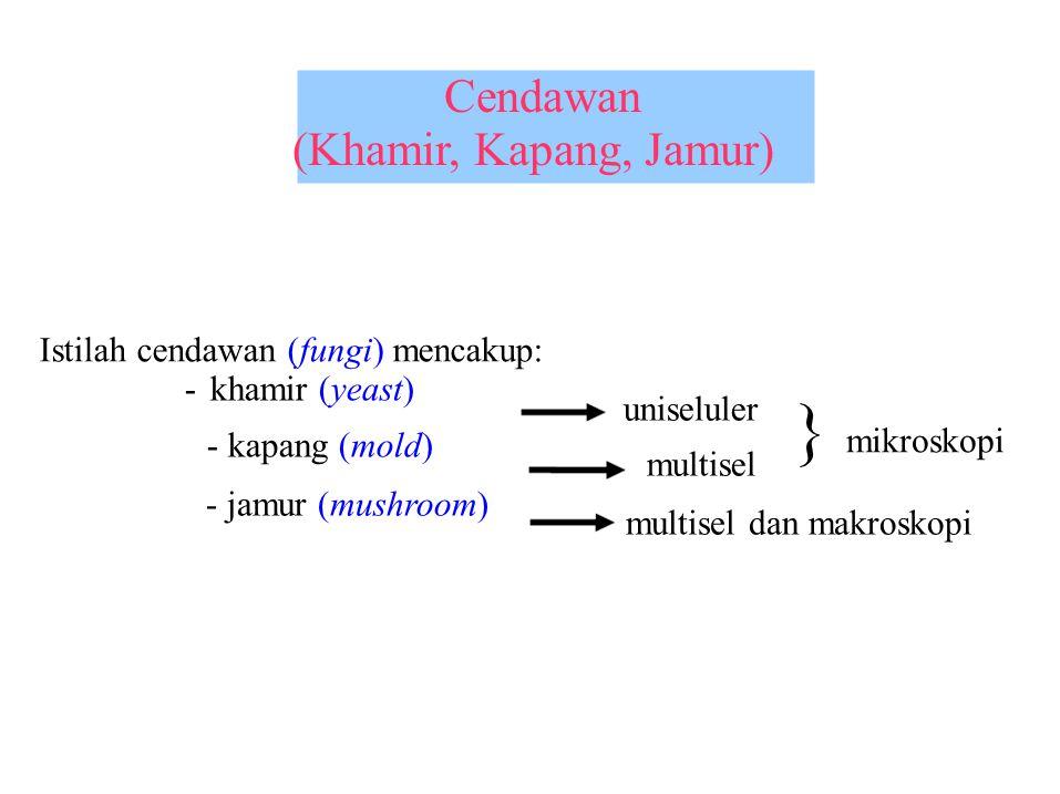 } mikroskopi (Khamir, Kapang, Jamur)