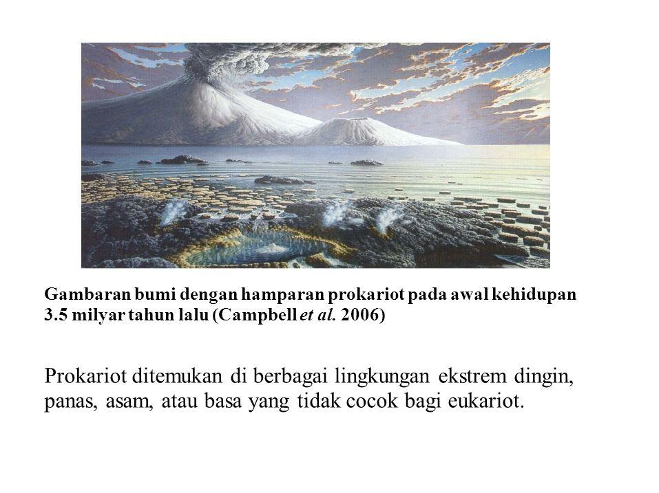 Prokariot ditemukan di berbagai lingkungan ekstrem dingin,