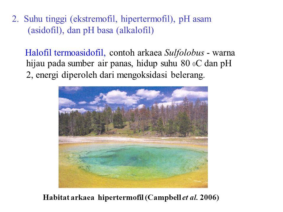 2. Suhu tinggi (ekstremofil, hipertermofil), pH asam