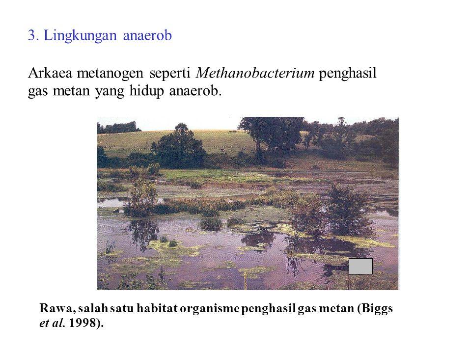 Arkaea metanogen seperti Methanobacterium penghasil