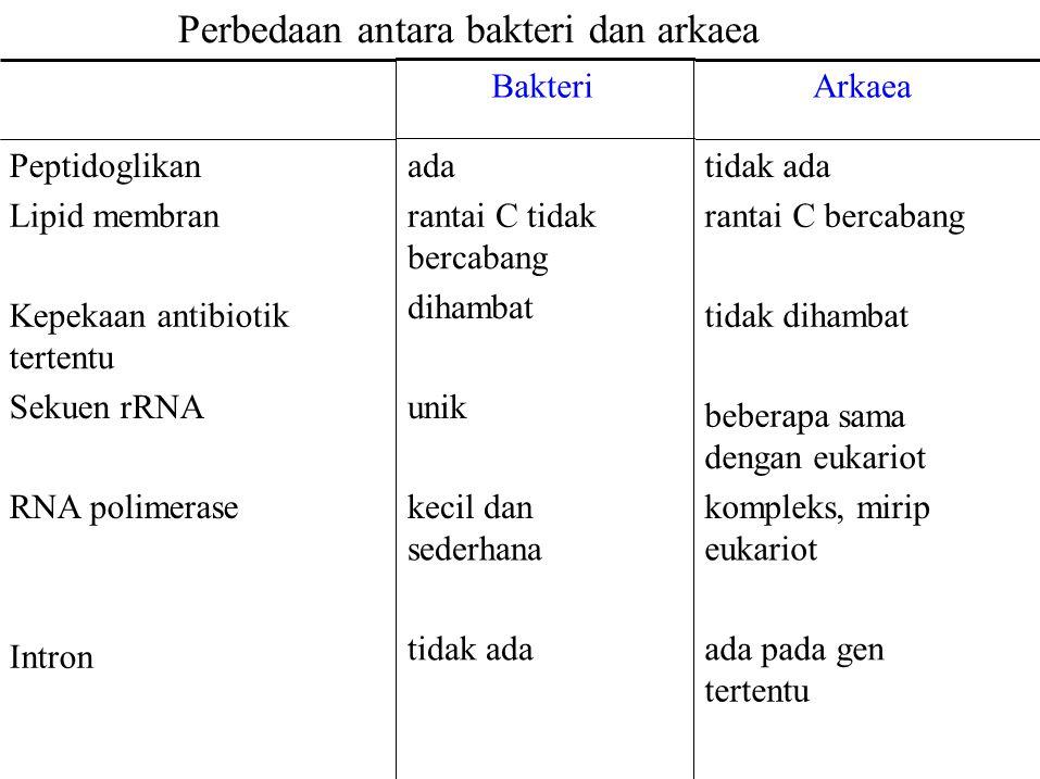 Perbedaan antara bakteri dan arkaea