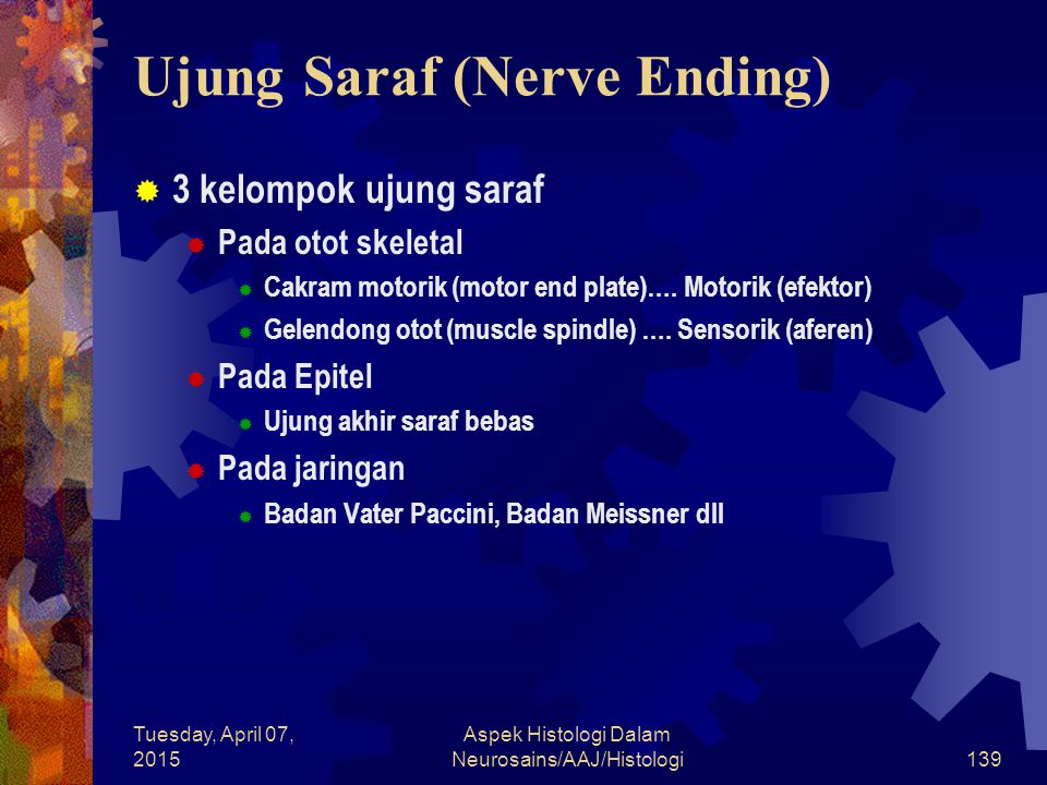 Ujung Saraf (Nerve Ending)