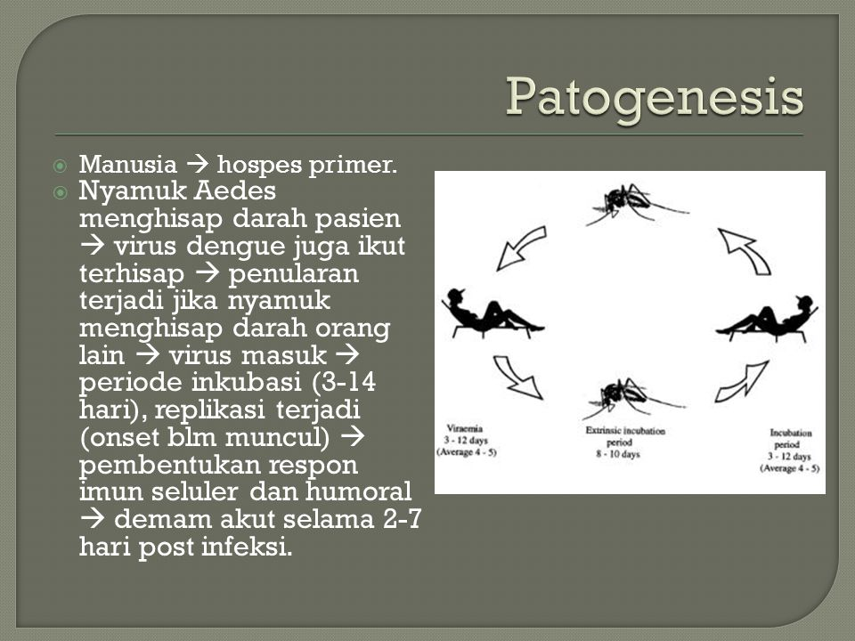 Patogenesis Manusia  hospes primer.