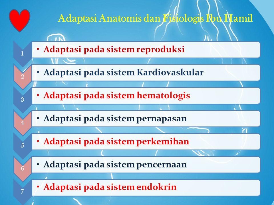 Adaptasi Anatomis dan Fisiologis Ibu Hamil