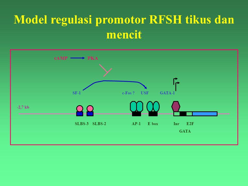 Model regulasi promotor RFSH tikus dan mencit