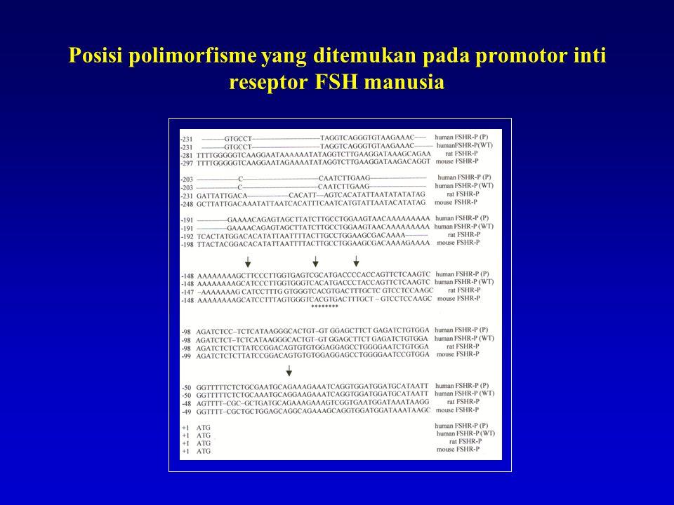 Posisi polimorfisme yang ditemukan pada promotor inti reseptor FSH manusia