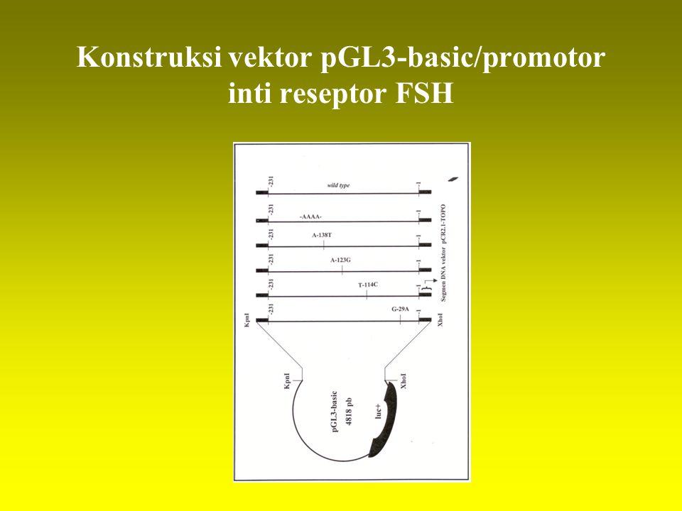 Konstruksi vektor pGL3-basic/promotor inti reseptor FSH