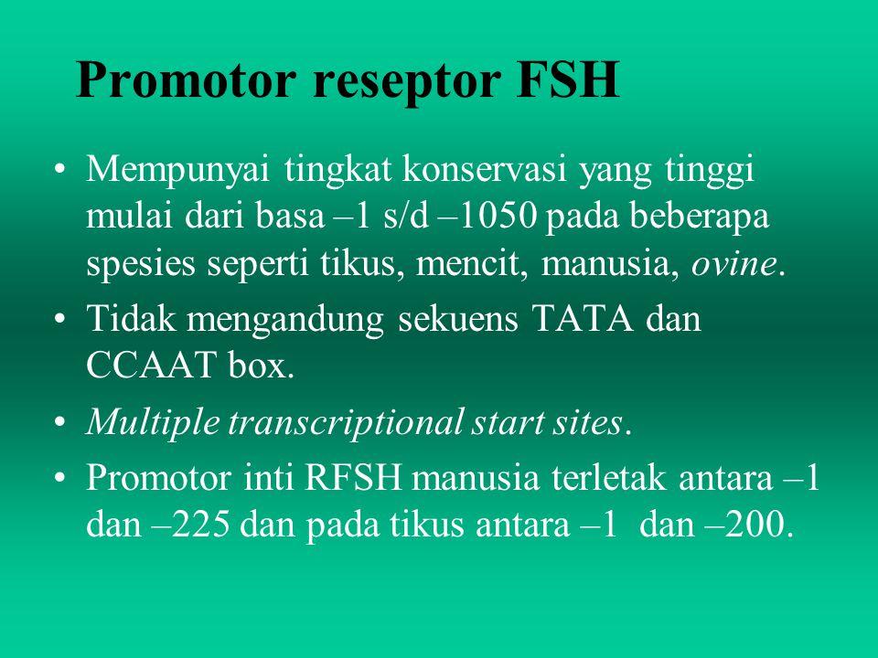 Promotor reseptor FSH