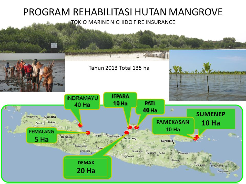 PROGRAM REHABILITASI HUTAN MANGROVE TOKIO MARINE NICHIDO FIRE INSURANCE