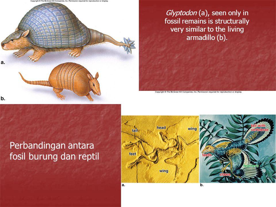 Perbandingan antara fosil burung dan reptil