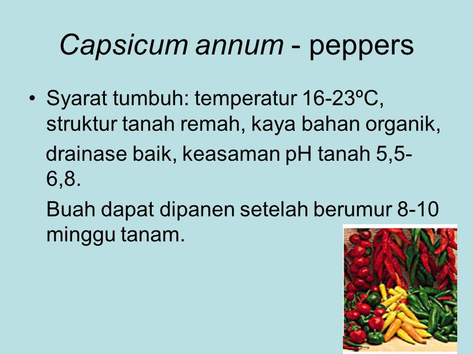 Capsicum annum - peppers