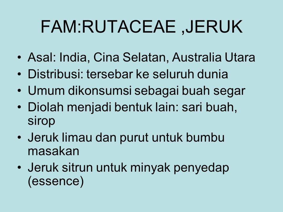 FAM:RUTACEAE ,JERUK Asal: India, Cina Selatan, Australia Utara