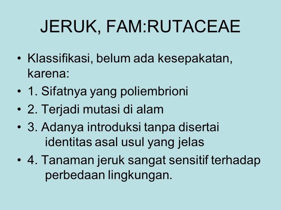 JERUK, FAM:RUTACEAE Klassifikasi, belum ada kesepakatan, karena: