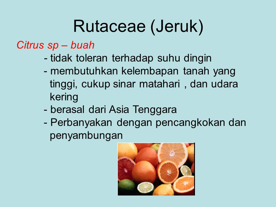 Rutaceae (Jeruk) Citrus sp – buah - tidak toleran terhadap suhu dingin