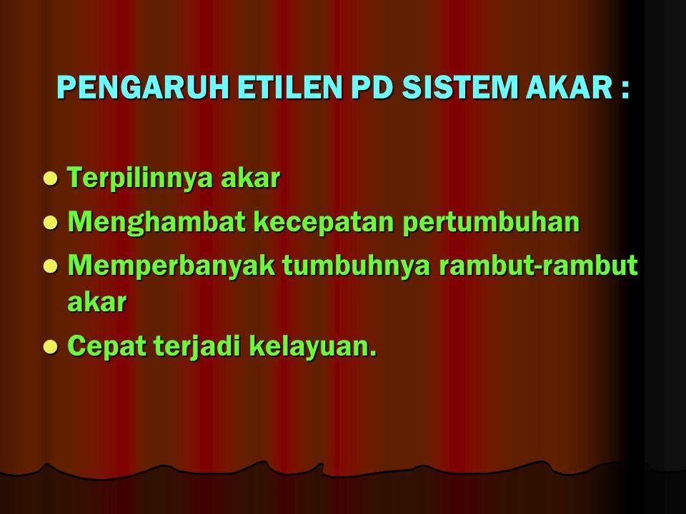 PENGARUH ETILEN PD SISTEM AKAR :