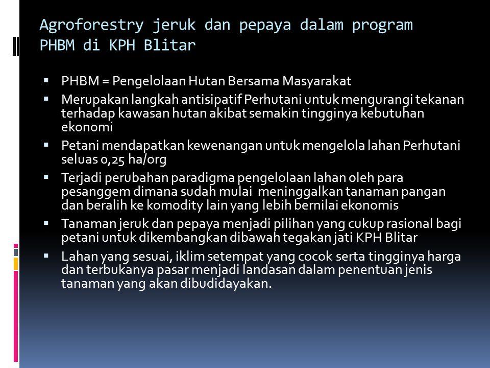 Agroforestry jeruk dan pepaya dalam program PHBM di KPH Blitar