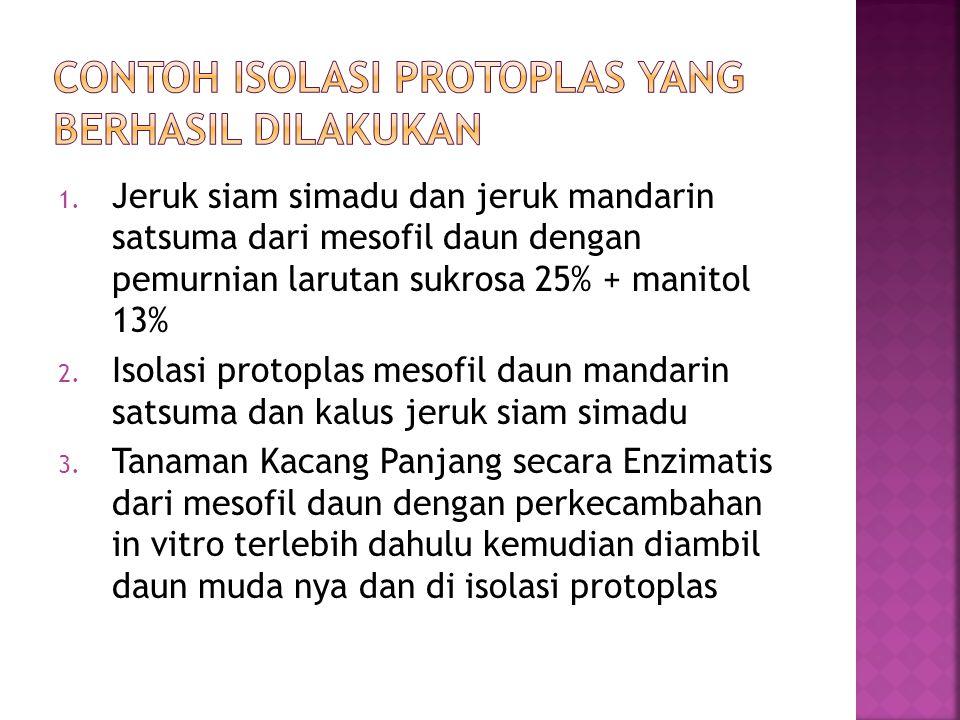 Contoh isolasi protoplas yang berhasil dilakukan