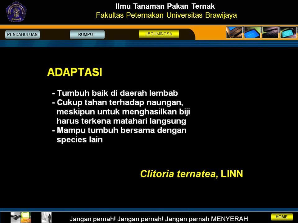 Ilmu Tanaman Pakan Ternak Clitoria ternatea, LINN
