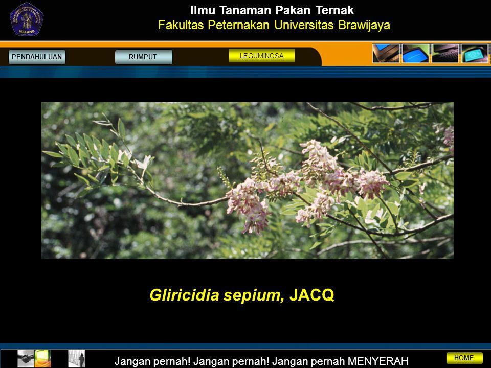 Ilmu Tanaman Pakan Ternak Gliricidia sepium, JACQ